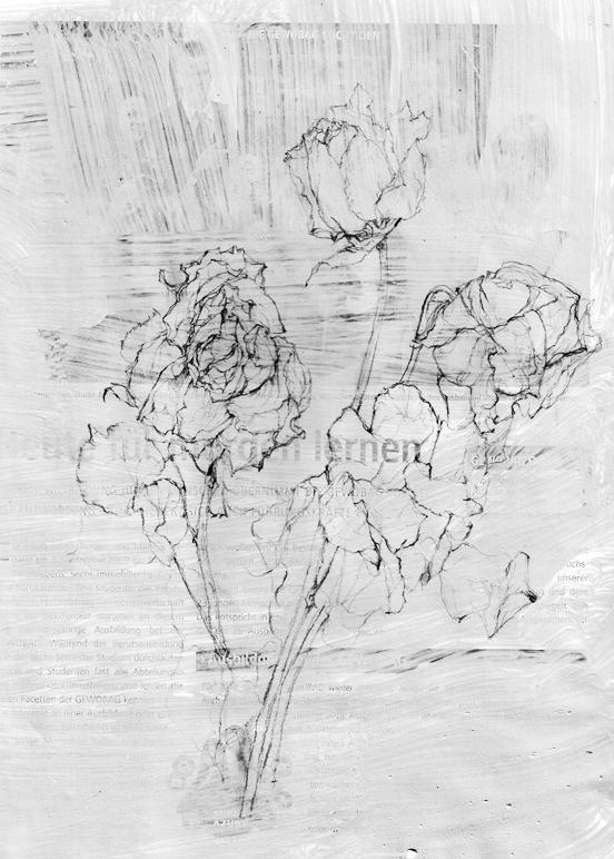 Rose 03
